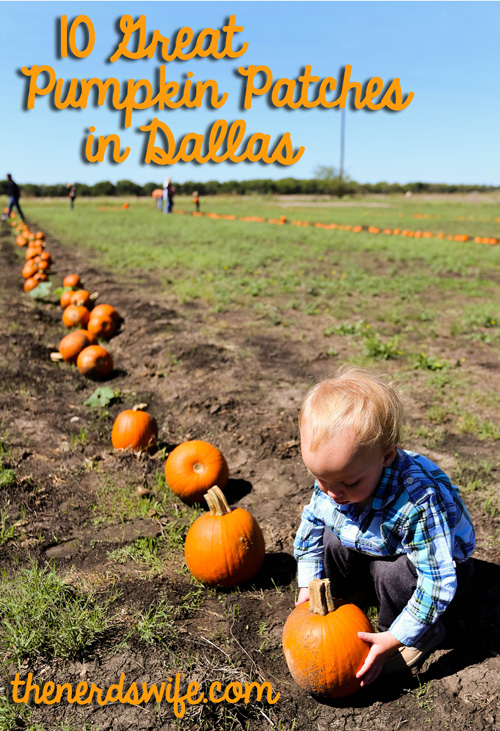 Best Pumpkin Patches in Dallas