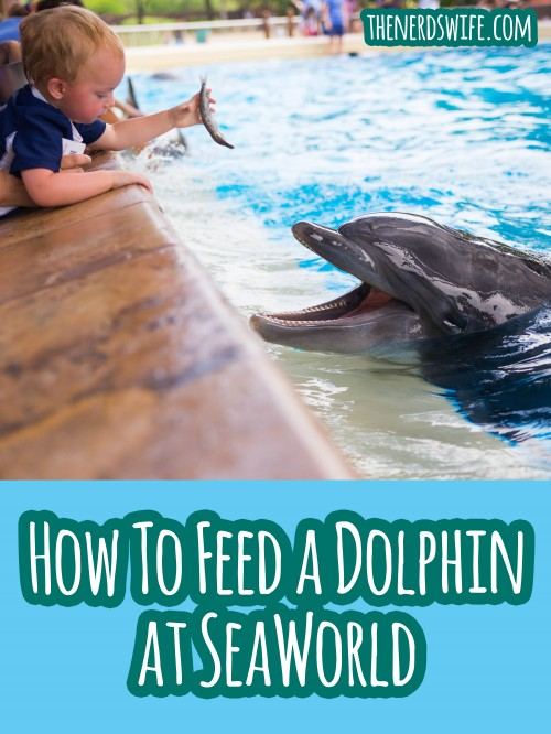 How to Feed a Dolphin at SeaWorld