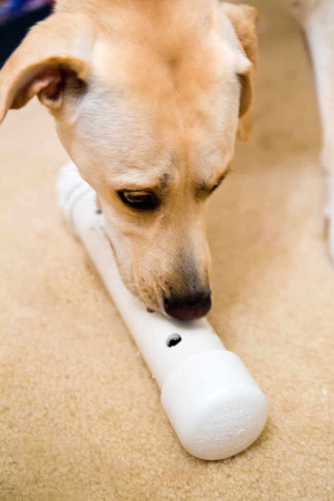 Dog Enrichment Toy