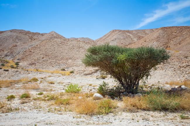 Judean Desert Jeep Tour